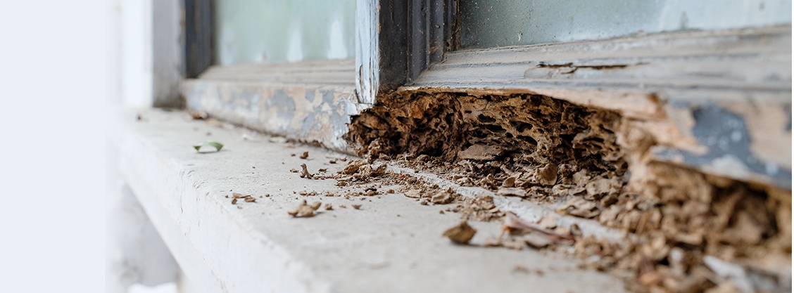 termite inspection, Maryland
